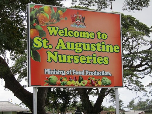 Welcome to St. Augustine Nurseries